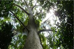 La preservación de los bosques pasa por la educación de los jóvenes