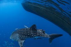 Cuidar las especies marinas significa cuidar nuestro futuro