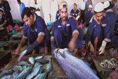 Bajos salarios y horribles condiciones laborales afectan a millones de pescadores