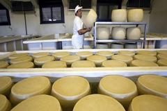 FAO: Los productos lácteos encarecen la canasta básica