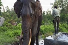 CITES en Ginebra: Doce días para trabajar en favor de las especies y los ecosistemas mundiales
