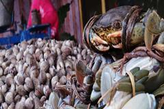 Los microplásticos en el pescado y los mariscos, ¿deberíamos preocuparnos?