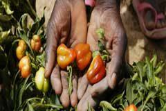 El Año Internacional de la Sanidad Vegetal: la oportunidad de combatir las plagas del cambio climático